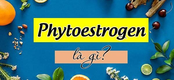 Phytoestrogen là gì