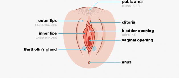 bộ phận sinh dục nữ